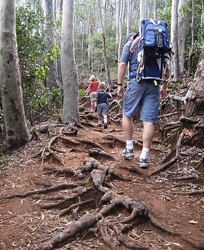 Aiea hike blog3