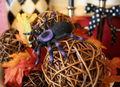 Spider on twig balls