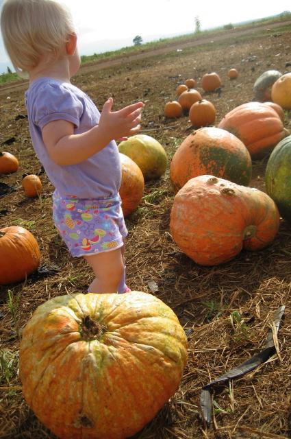 Hazel in pumpkins