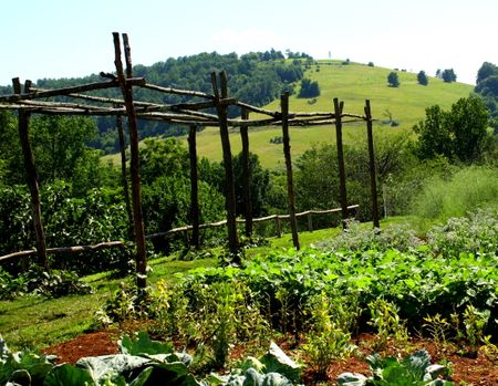 Garden with arbor