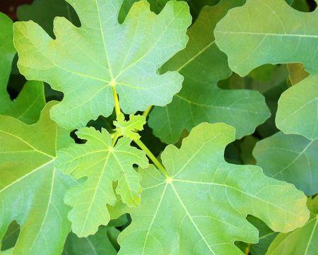 Leaves detail