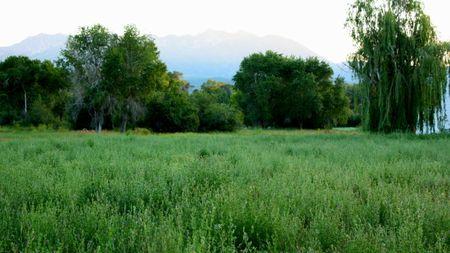 Huntsville landscape2