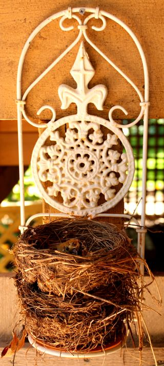 Songer bird nests