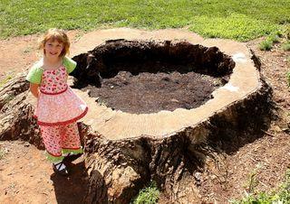 Eliza with giant tree trunk 2