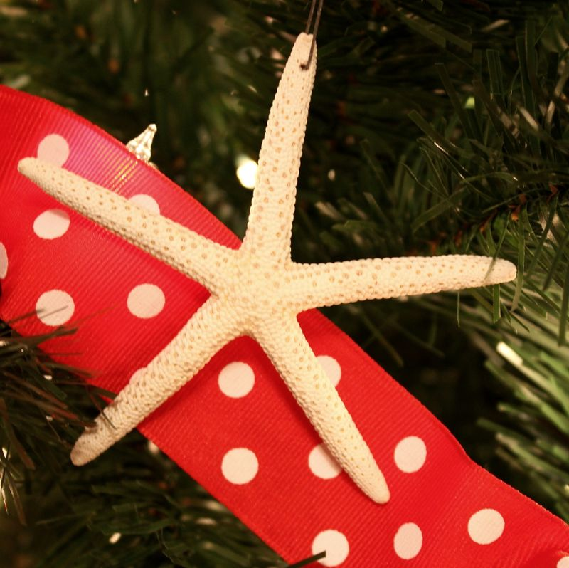 Seastar ornament