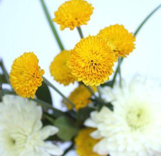 Eccles, mini bouquet