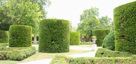 Garden topiaries