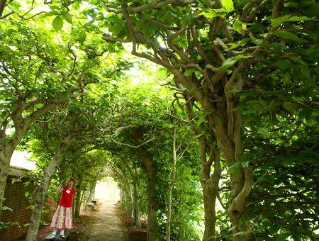 Garden tunnel interior