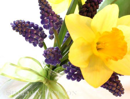 Daffodil3named