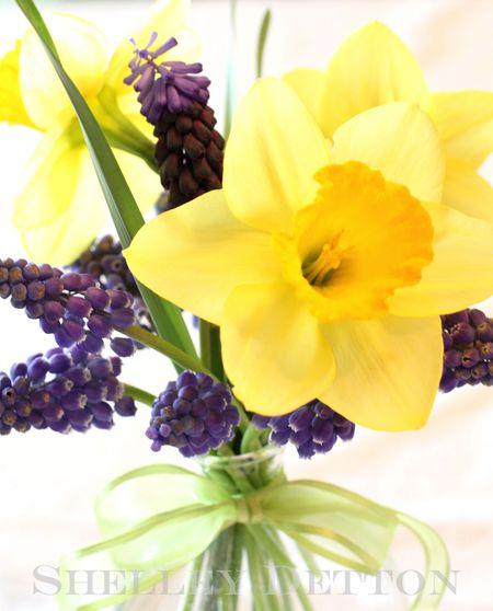 Daffodil2named