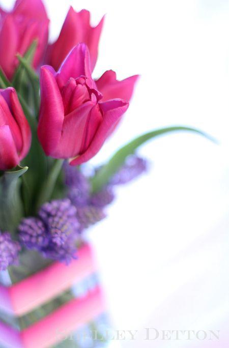 Tulip8named
