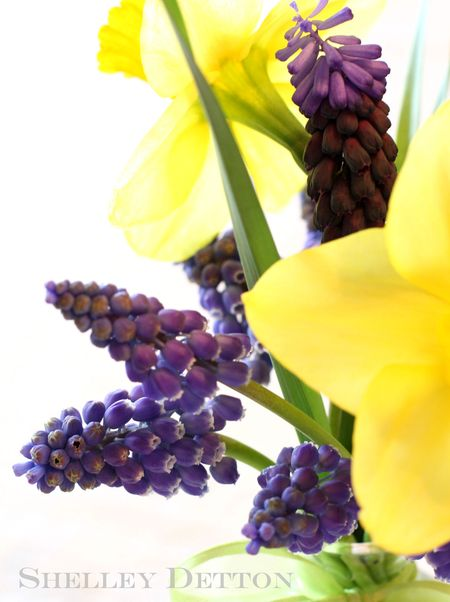 Daffodilnamed