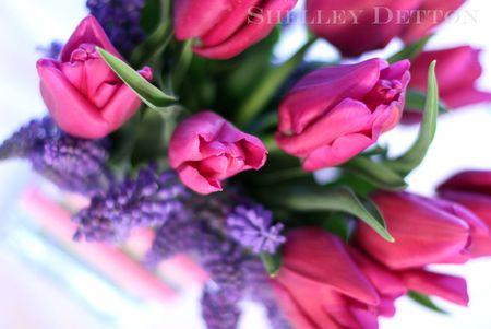 Tulip12named