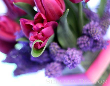 Tulip6named