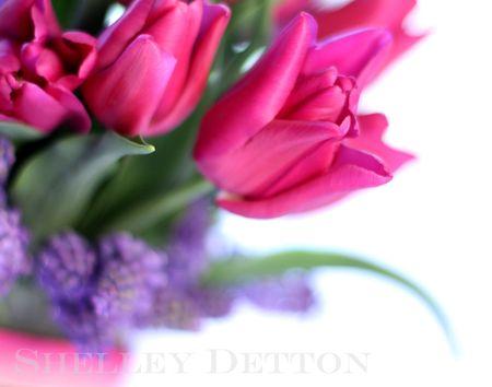 Tulip7named