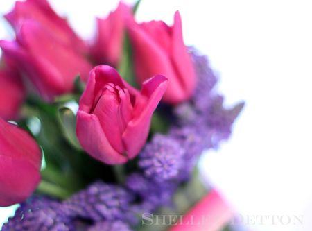 Tulip10named