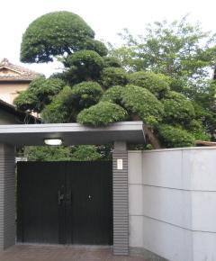 Gateway_tree_blog_2