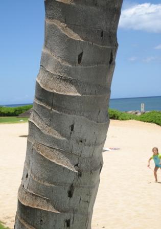 Palm_tree_trunk_blog